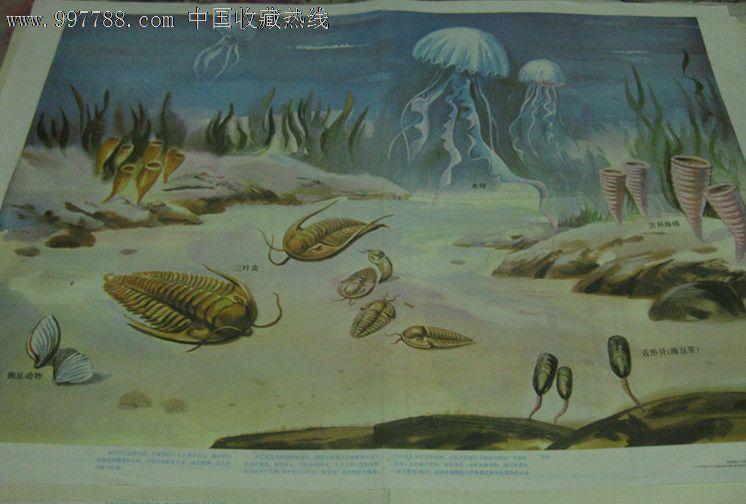 (对开挂图)古代海洋生物