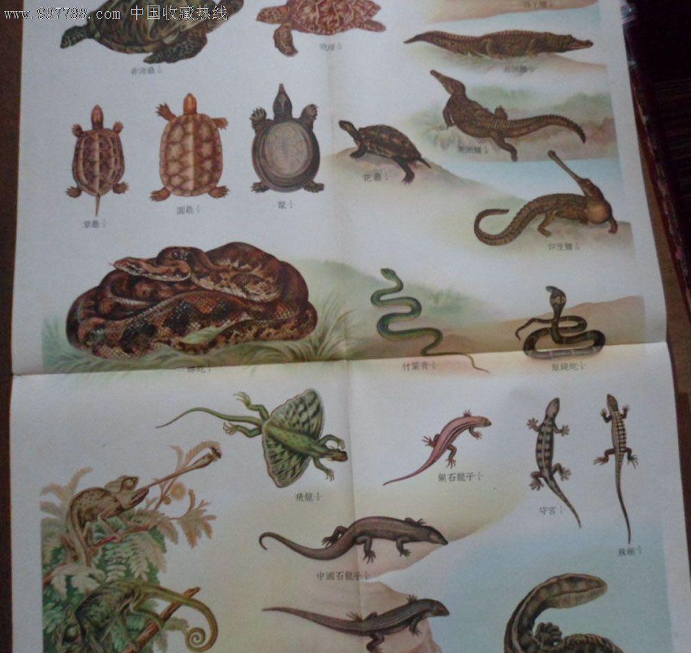 脊椎动物--爬行类_价格20元_第1张_中国收藏热线