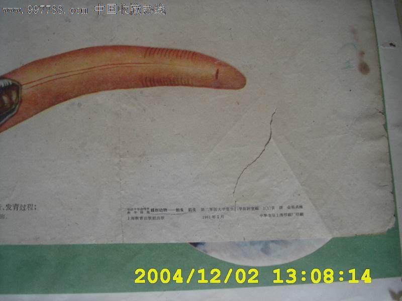 蛔虫结构图简笔画