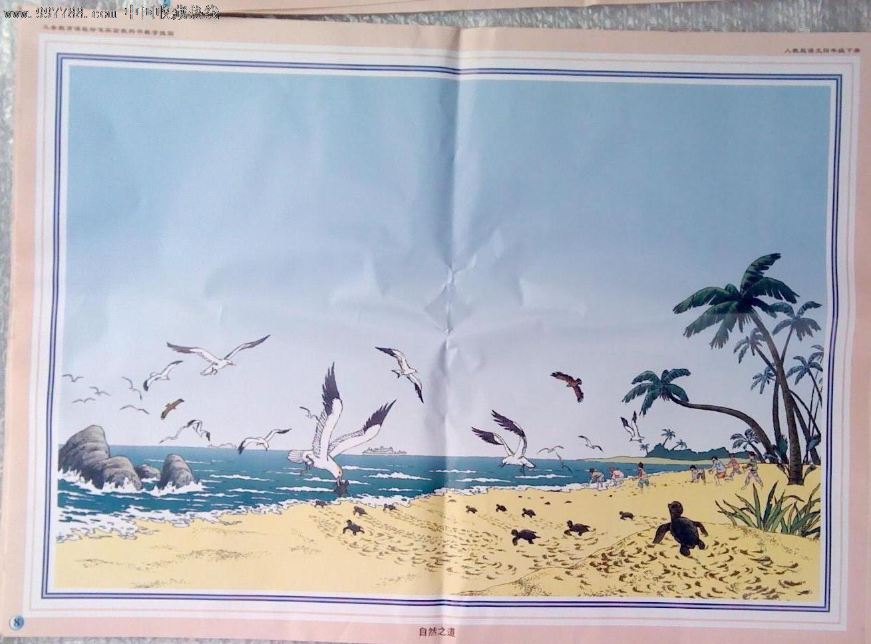 自然之道教学设计图片展示