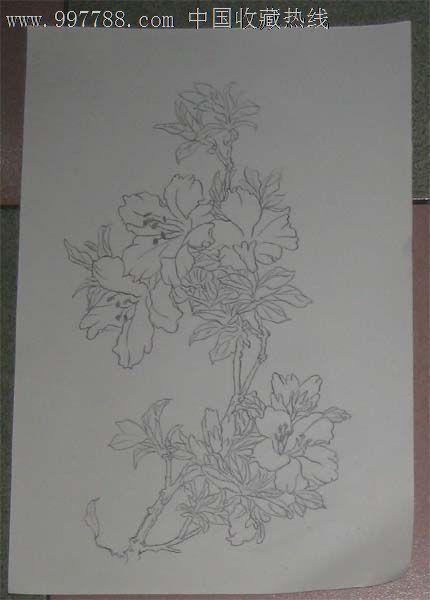 白描花卉——百合花_素描/速写