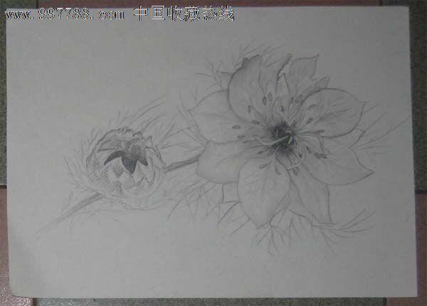 素描花卉静物步骤