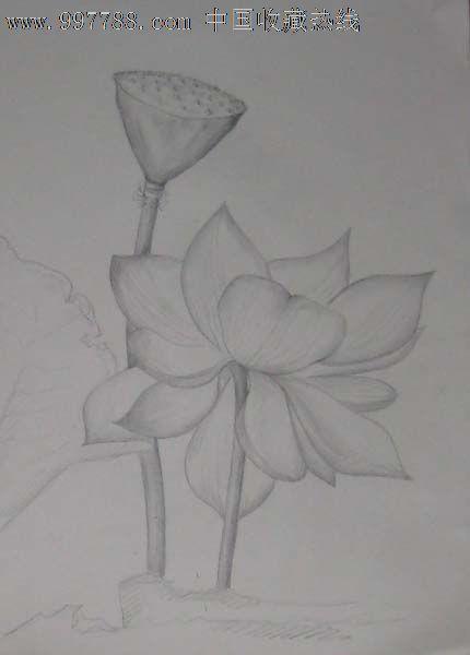 莲花铅笔手绘图