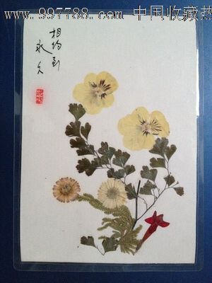 手工制作植物标本【相约到永久】_树叶/植物标本_蜀乡