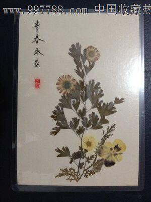 手工制作植物标本【青春永葆】_树叶/植物标本_蜀乡