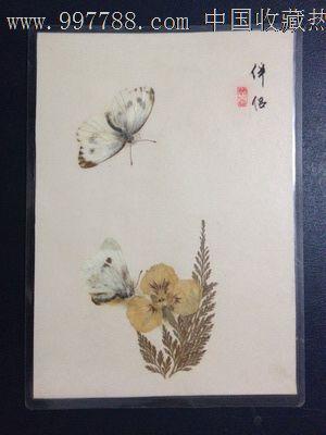 手工制作动植物标本【伴侣】