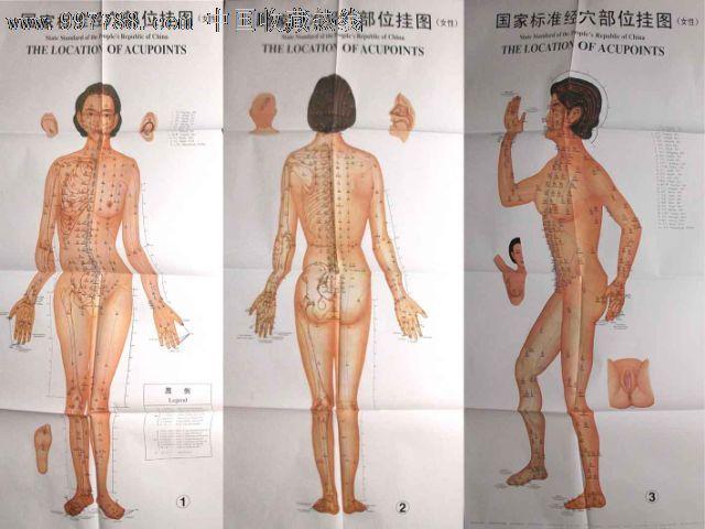 标准经穴部位挂图女性