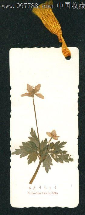 早期日本高山植物手工制作标本书签135x58mm(4)
