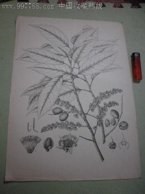 美丽的植物和动物绘画