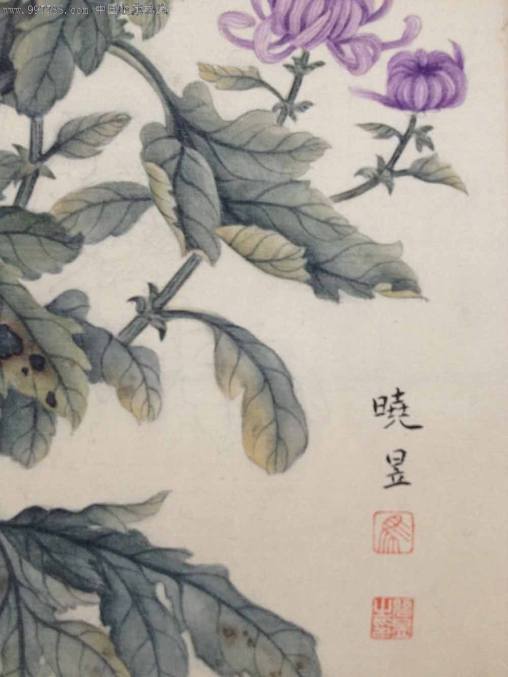 马晓昱工笔画-花卉菊花_价格元_第2张_7788收藏__中国收藏热线