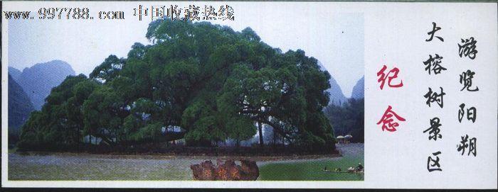 0626广西阳朔大榕树景区门票--全品