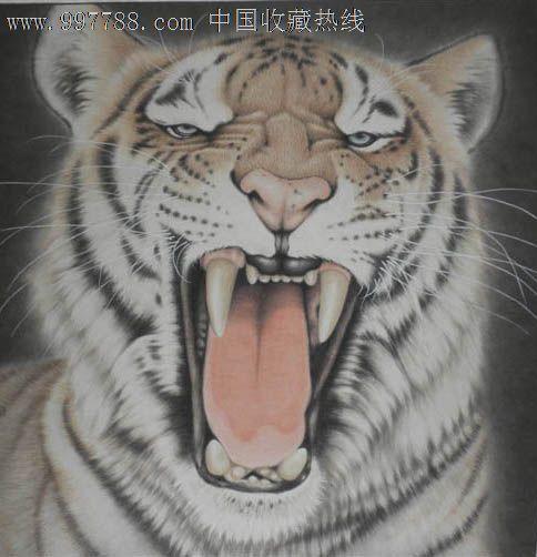 壁纸 动物 虎 老虎 桌面 484_502