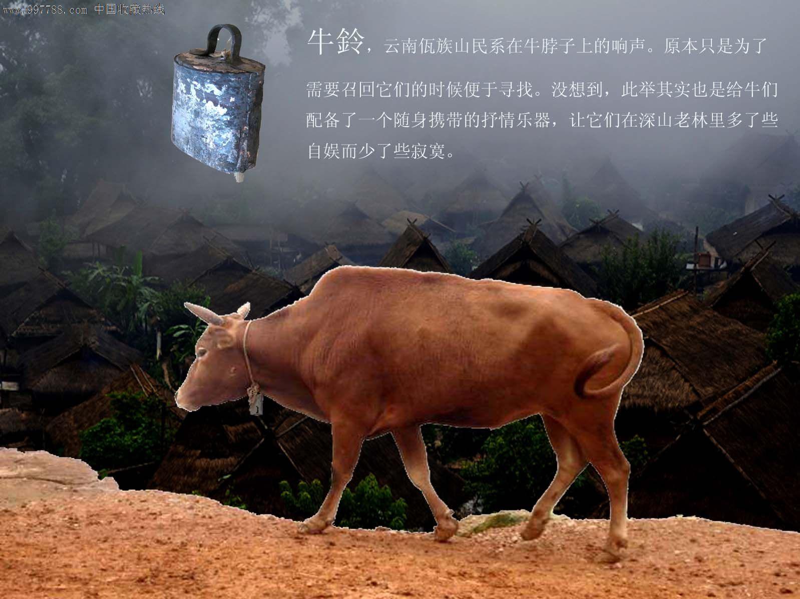 产地:云南临沧佤族村寨。使用价值:居室、环境民俗氛围的营造;民俗物品收藏;乐器;声响配音;牧牛实用。工艺:工艺是响声和耐用的品质保障。通过反复的锻烧;走铜和密配的黏合、音腔工艺;铃首通过铆钉与铃肩结合,并盘扣于铃裙。响声和美、幽远;个性化强,能辨声识牛。坚固耐用,抗腐防锈。