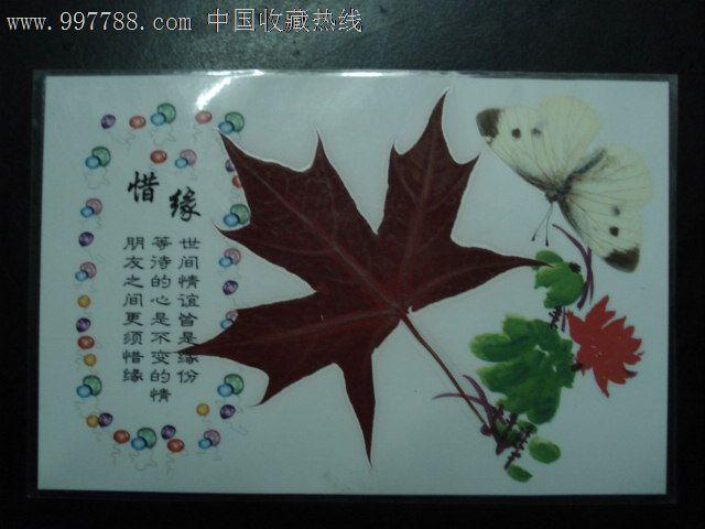 枫叶和蝶_树叶/植物标本