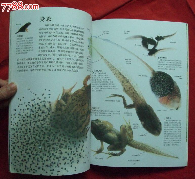两栖动物_综合绘画类画册_湖南纸质品收藏屋【中国