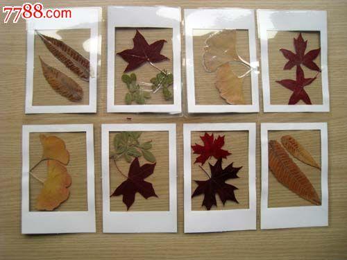 树叶标本贺卡
