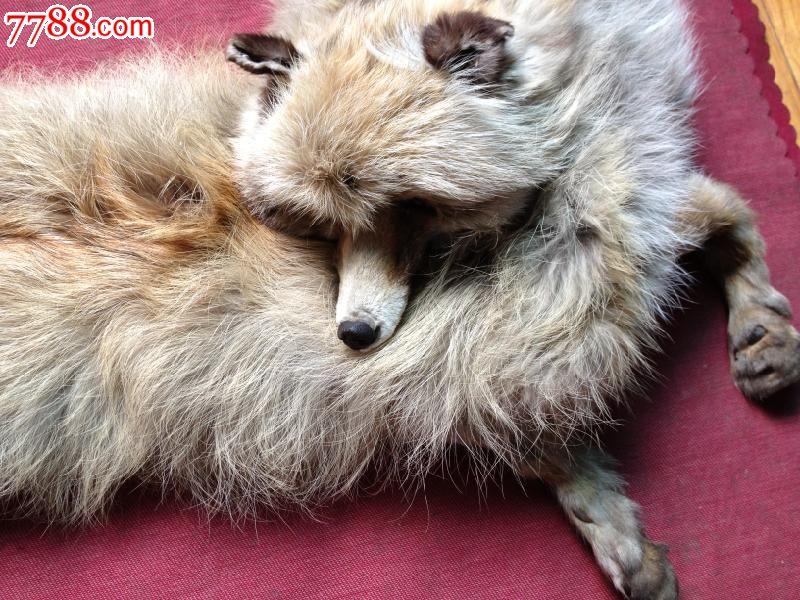 怎样做动物头饰狐狸
