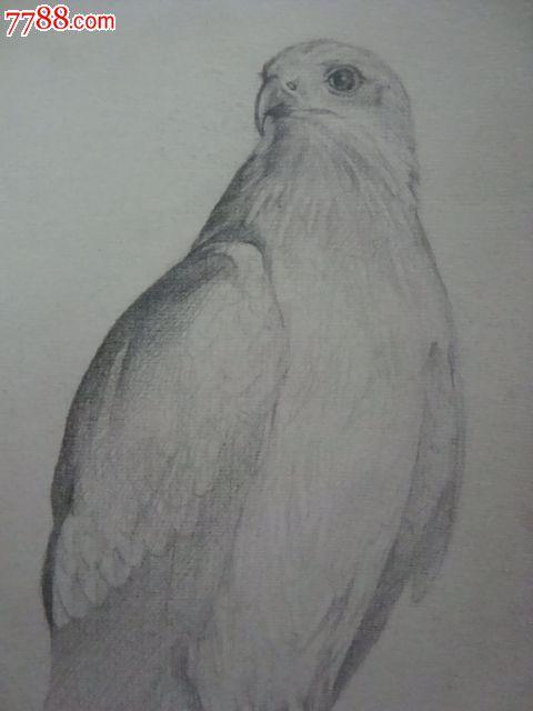 铅笔素描可爱动物画