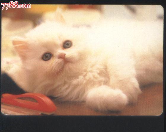 香港果品公司·1992年历卡印可爱猫咪图