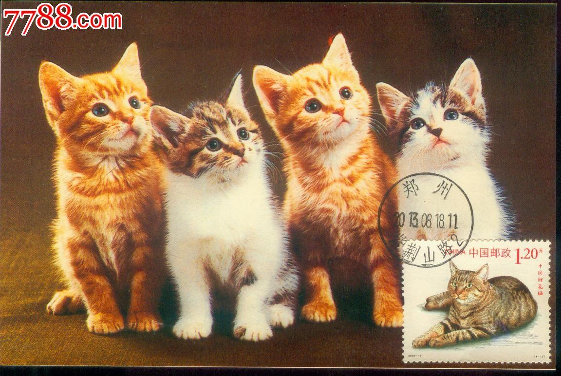 壁纸 动物 猫 猫咪 小猫 桌面 1152_772