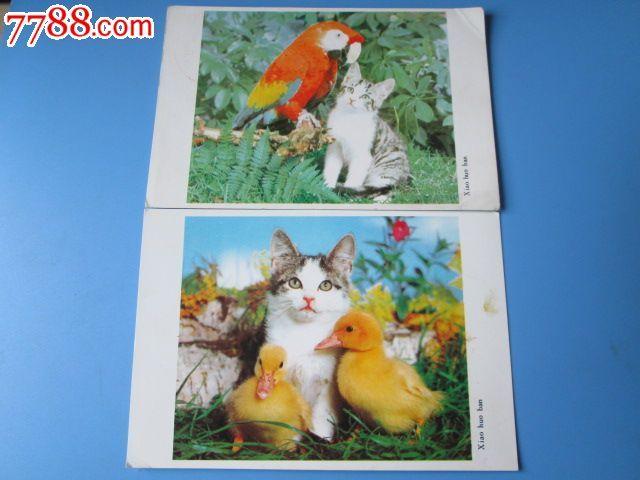 小伙伴--动物明信片/(4张)_价格3元_第2张_7788收藏__中国收藏热线