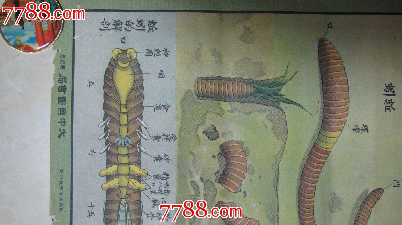 大中国图书局:节肢动物,多足类,软体动物,环形动物