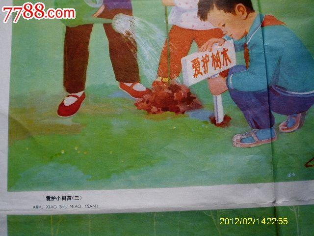《爱护小树苗》教学挂图2张