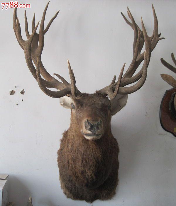 长脖进口鹿头标本欧式壁炉装饰品欧洲田园风格鹿头挂件鹿头标本