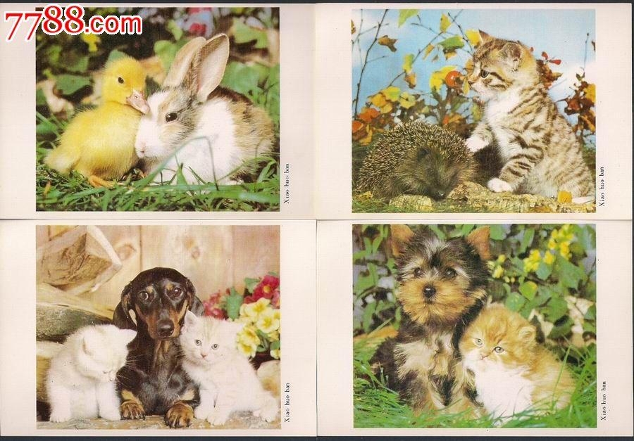 小伙伴明信片(小动物)