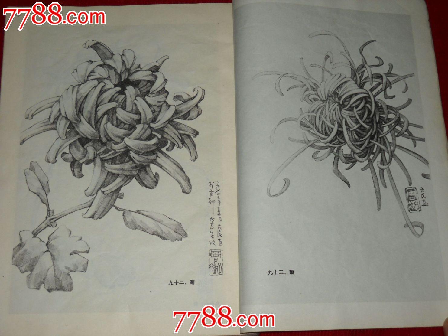 好看的铅笔画花卉