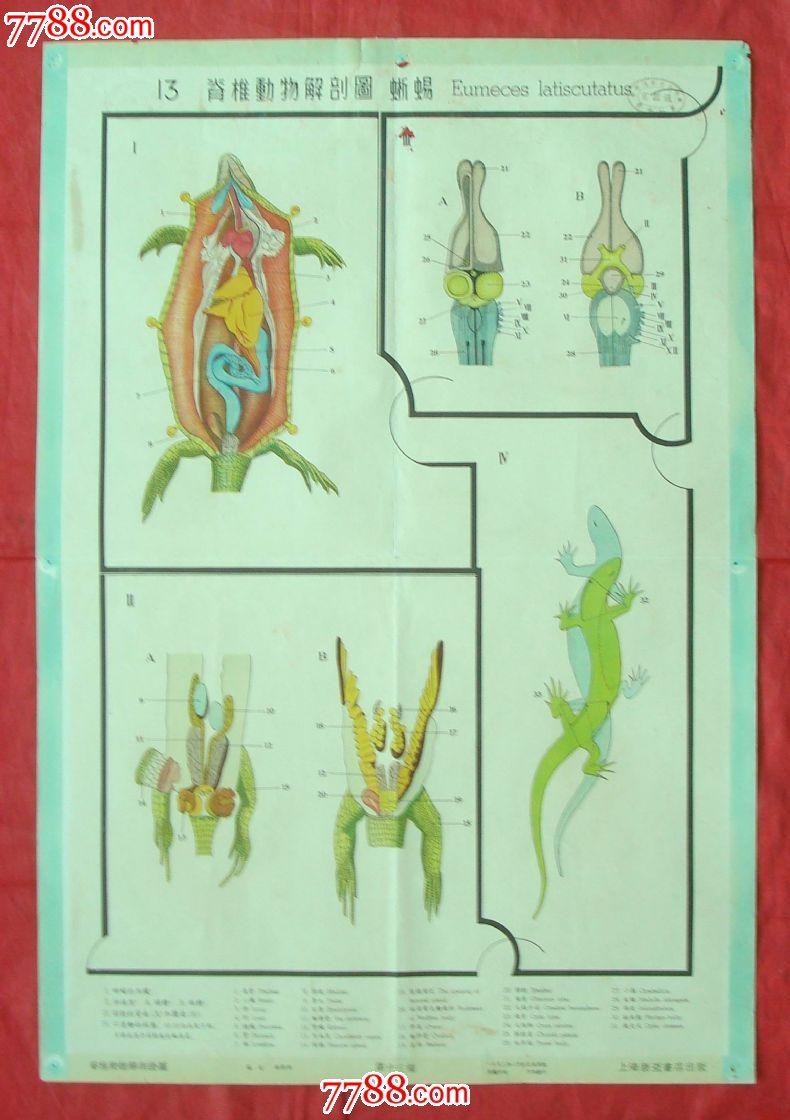 脊椎动物解剖图[13]