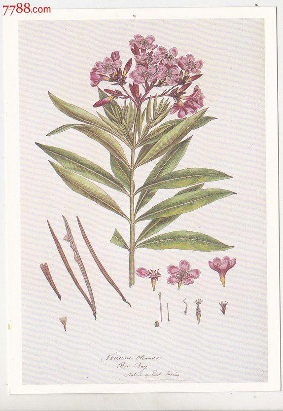 植物明信片图片