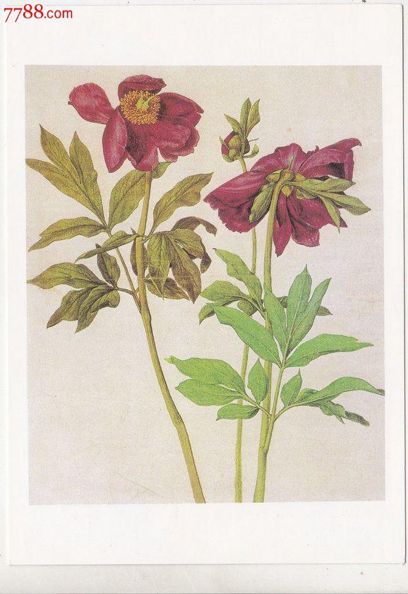 外国原版明信片德国花卉绘画