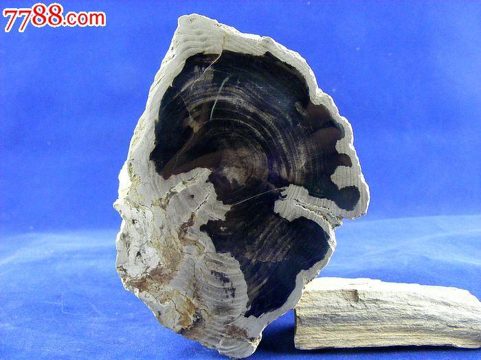 辽西朝阳特产天然古生物树化玉木化石树化石硅化木奇石观赏石17