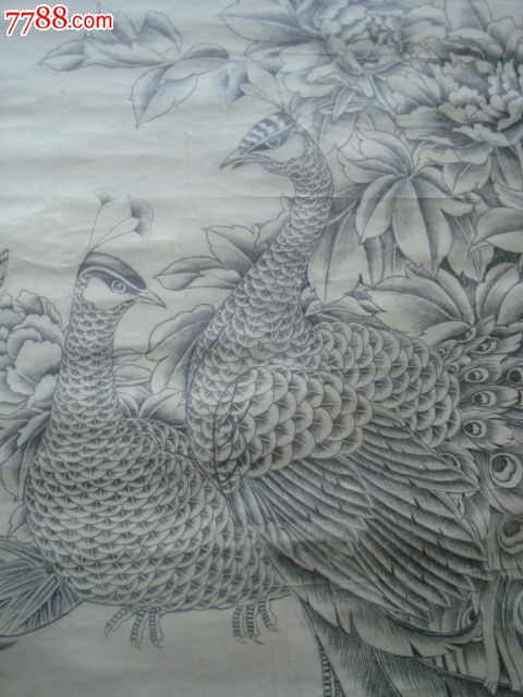 铅笔素描画 孔雀之二