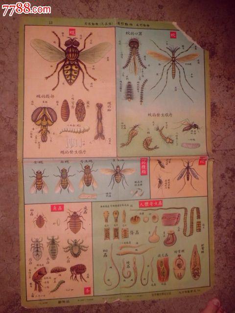 节肢动物昆虫类圆形动物扁形动物