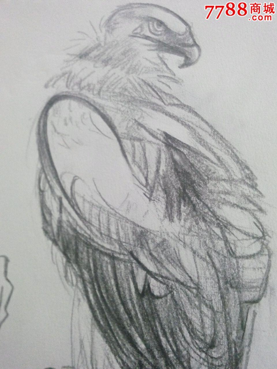 老鹰铅笔画素描图片