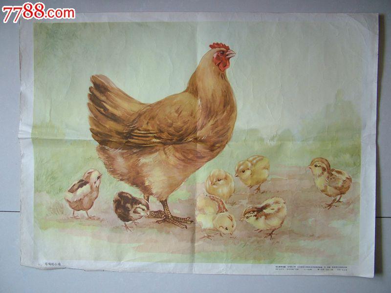 1957年飘亮的鸡画,4开_价格100元【齐鲁古韵斋】_第1张_中国收藏热线
