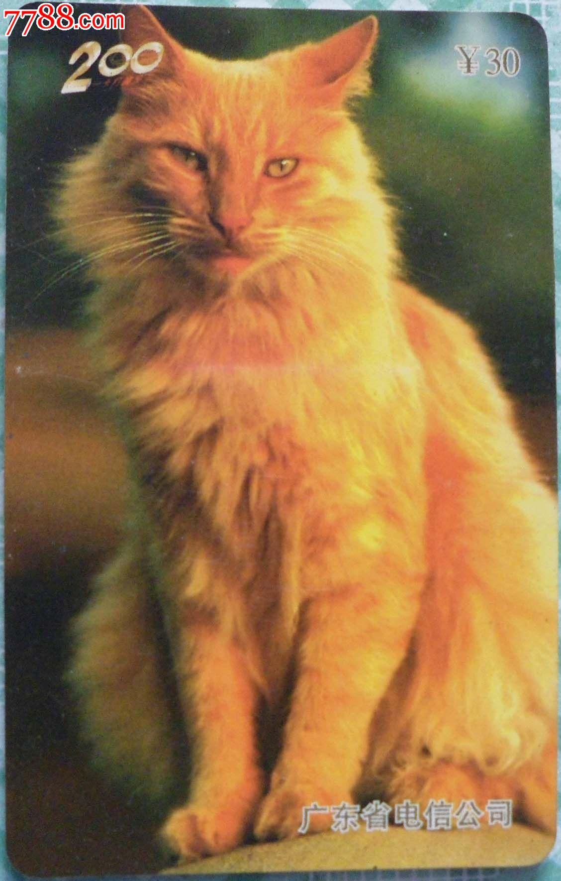 壁纸 动物 猫 猫咪 小猫 桌面 1128_1770 竖版 竖屏 手机