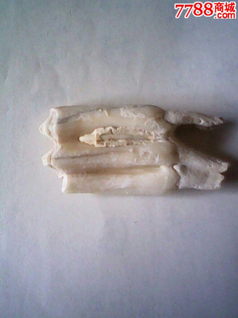 史前动物化石